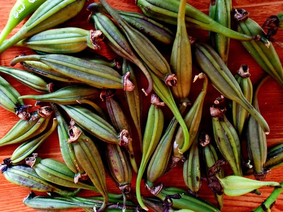 Quả hoa lan Phi Điệp - Giả Hạc