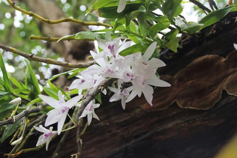 Chăm sóc hoa lan vào mùa thu và mùa đông