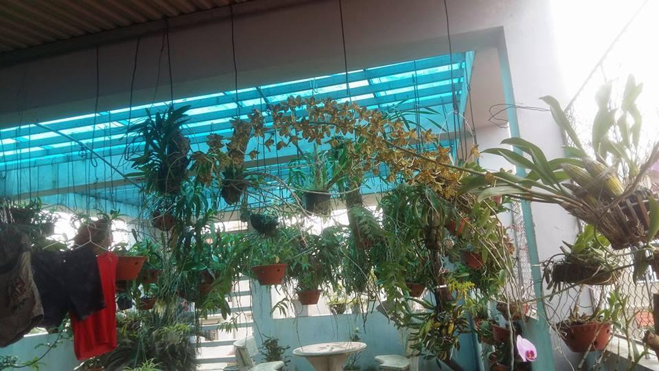 Cách tạo độ ẩm cho vườn lan trên sân thượng