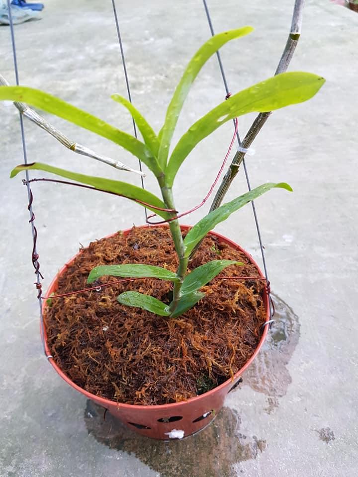những sai lầm khi trồng lan
