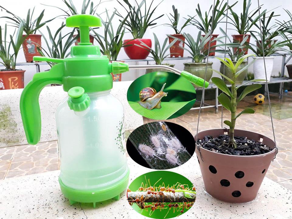 thuốc diệt côn trùng cho hoa lan