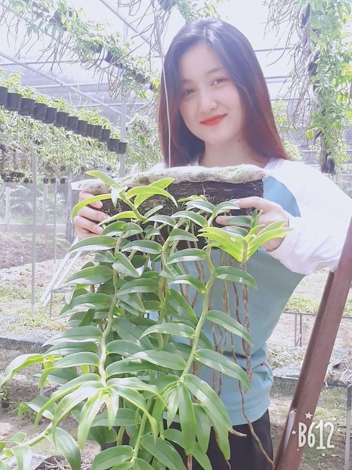 yêu phong lan