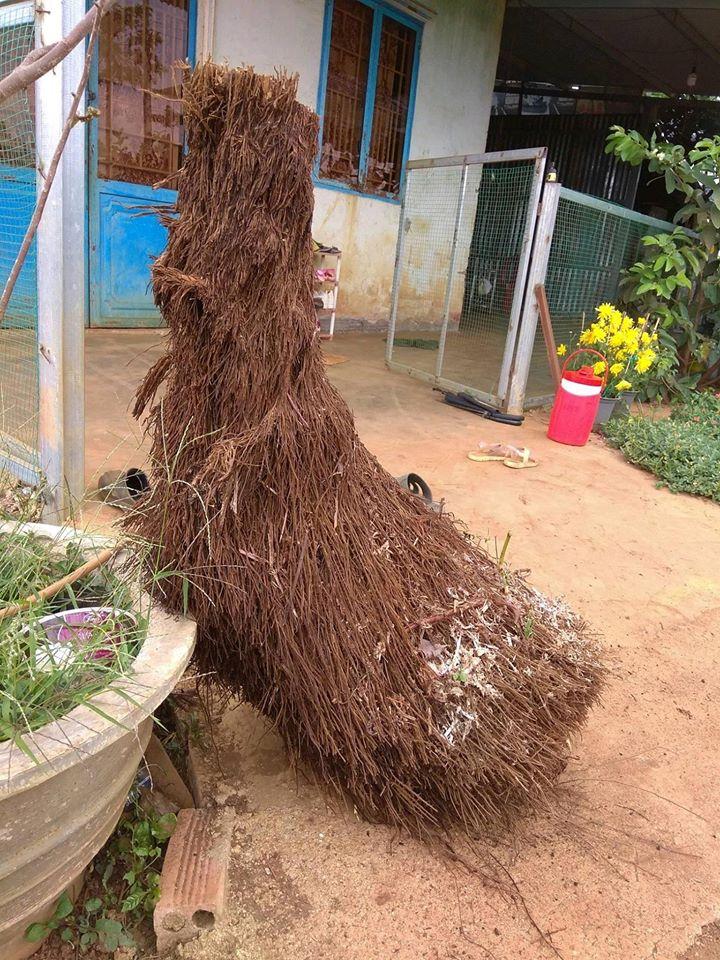 dớn sợi trồng lan