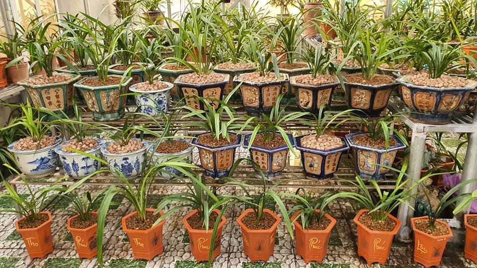 cách trồng địa lan
