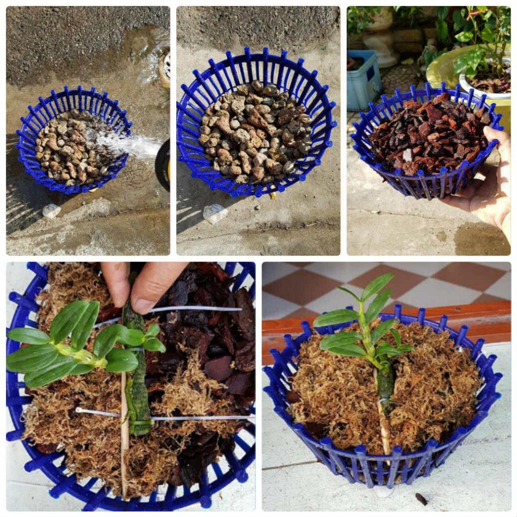 cách trồng lan đơn giản