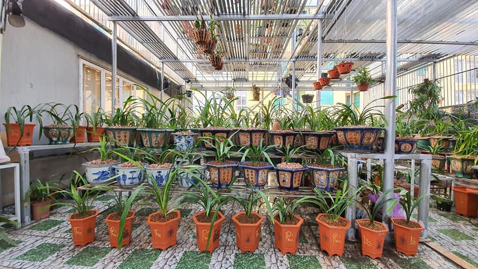 cách trồng và chăm sóc địa lan
