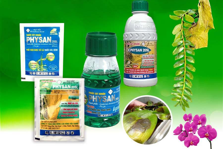 physan cho lan