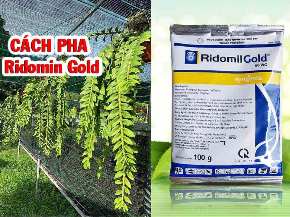 Ridomil gold cho lan